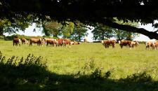 Het geheim van Iers rundvlees