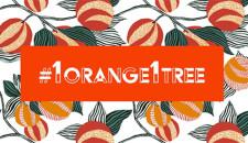 #1orange1tree